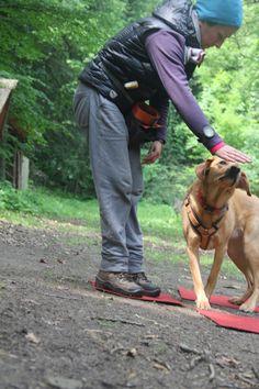 Nonverbal mit deinem Hund trainieren und üben! Pet Dogs