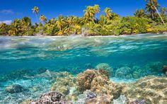 Lataa kuva Trooppisia saaria, vedenalainen maailma, koralleja, hain, kala, veden alla, palmuja, kesällä, ranta, sukellus