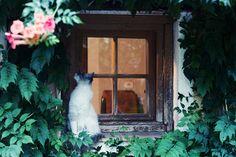 Kuvapäiväkirja Provencesta - Kaikki mitä rakastin | Lily.fi