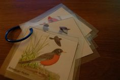This would be good for the girls...easy way to make field guides for myself too for weeds.