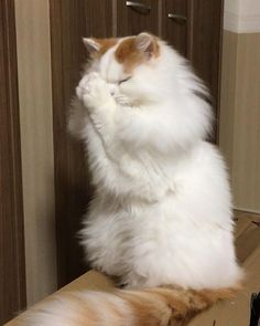 18 Cats That Are Praying For The Weekend - World's largest collection of cat memes and other animals Cute Cats And Kittens, Baby Cats, Cool Cats, Kittens Cutest, I Love Cats, Kitty Cats, Cute Kitten Gif, Cute Funny Animals, Cute Baby Animals