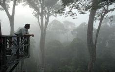 Borneo rainforest canopy walkway.