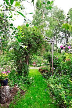 Ruusujen tuoksua ja kauneutta Pohjanmaan rannikolla - A Rose Garden on the West Coast of Finland Photo Kirsi Tuura www.viherpiha.fi