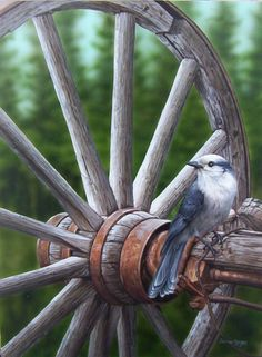 "Darren Haley - ""Whiskeyjack (Canada Jay)"". These large, brave birds are a staple at mountain picnic tables, looking for a handout or an opportunity to pilfer a morsel."