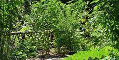 geeft advies en ontwerpt - Eetbare tuin met permacultuur technieken