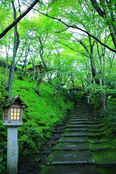 京都 常寂光寺 末吉坂 青もみじ 苔 Japan,Kyoto,Jyojakko-ji temple,fresh green,blue maple,moss