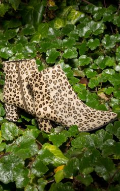 Wild thing. Shoe Shop, Kid Shoes, Brown Boots, Animal Print Rug, Ankle Boots, Footwear, Man Shop, Beige, Kids