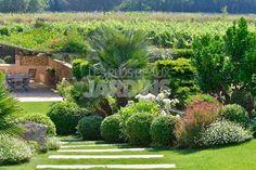 Jardin dans les vignes, arbustes persistants taillés en topiaire, Derbez