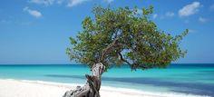 Aruba!,