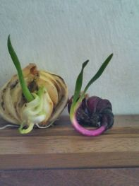 Onion by Priscilla Quilala.