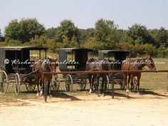 Horses and buggies at a produce auction in Ethridge, TN.