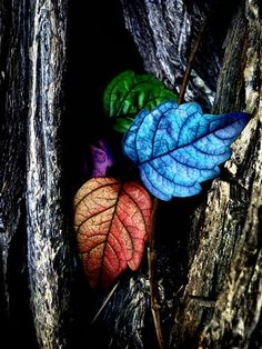 colored leaves,,,color splash,,,