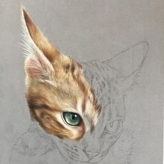 Marvelous Drawing Animals In The Zoo Ideas. Inconceivable Drawing Animals In The Zoo Ideas. Art Pastel, Pastel Drawing, Cat Drawing, Colored Pencil Artwork, Color Pencil Art, Animal Sketches, Animal Drawings, Pencil Drawings, Illustration Au Crayon
