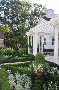 Such a beautiful boxwood & white garden with pergola