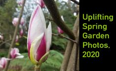 Uplifting spring garden photos, 2020 | Ferny Hill Retreat Holiday Apartments, New Growth, Garden Photos, Spring Has Sprung, Romantic Couples, Spring Garden, Emerald, Bloom, Emeralds