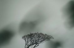 Ryo Fujimoto - live on air(tree) 2010, Direct Print,600×900mm, edition of 8