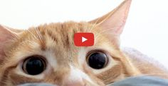 """Click to see the fabulous Marmalade doing something very """"cat-like!"""""""