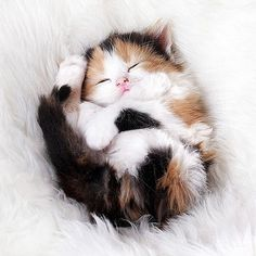 Cute kittens: The latest and cutest kitty videos are here for you. Cute kittens: The latest and cutest kitty videos are here for you. Cute Cats And Kittens, I Love Cats, Crazy Cats, Adorable Kittens, Fluffy Kittens, Kittens Playing, Kittens Cutest Baby, Persian Kittens, Ragdoll Kittens
