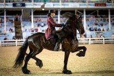 """34/"""" X 36/"""" Lucky Fer à Cheval tissés à la main laine cheval selle western couvertures"""