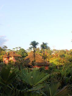 Cabañas en medio del bosque tropical, ven y admira toda la #naturaleza que te rodea. #ArasháResort