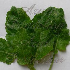 Heirloom Seven Top Turnip Greens Seed Heirloom Seven Top Turnip Greens Vegetable Seed [1-68-450] - $1.75 : Azure Dandelion, Heirloom Seeds and Folk Art