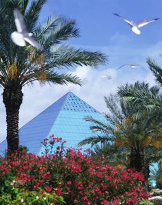 Moody Gardens Hotel, Spa & Convention Center   Galveston, TX   10-story rainforest pyramid, white sand beach, lazy river, paddlewheel boat, FX theaters, golf course, etc.