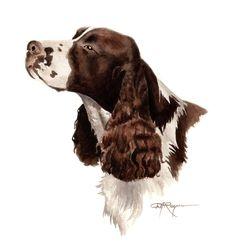SPRINGER SPANIEL Dog Watercolor Painting ART Print Signed by Artist DJ Rogers. via Etsy.