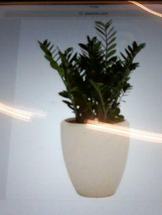 De plant die op de kast staat