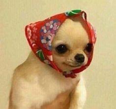 sarah green: illustrator living in SF - fursonar: look at this little babooshka Cute Animal Memes, Animal Jokes, Cute Memes, Cute Funny Animals, Funny Animal Pictures, Funny Dogs, Cute Dogs, Cute Babies, Weird Dogs