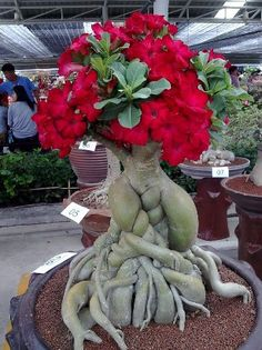 Image from http://1.bp.blogspot.com/-cxGdNNGiJLo/ThgjYKHnuOI/AAAAAAAAADM/vbGXMmCI30k/s1600/2737_1.jpg.
