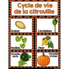 Cycle de vie de la citrouille                                                                                                                                                      Plus