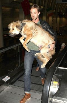 Pin for Later: Hot Hollywood Guys Are Even Hotter When Paired With Pups  Ryan Gosling carried his full-grown dog, George, like a baby through an LA airport terminal in June 2011.