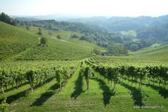 Vineyeards in southern Styria