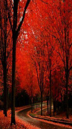 Autumnal Bliss
