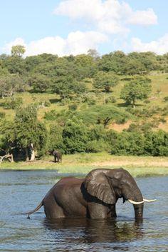 Gotta love African Safari - Chobe National Park, Botswana