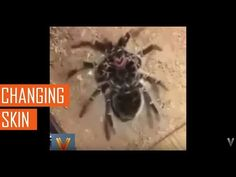 Viral videos,Changing skin.Thanks for watching ! Your favorites , of the best…