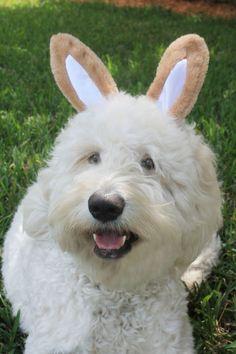 My sweet doodle-bunny!