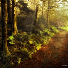 """""""Path of Enlightenment"""" A stroll through the gardens early one foggy morning https://www.facebook.com/TommyWhitephoto"""