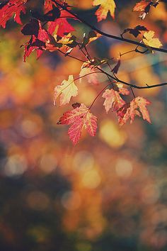 Bokeh in Autumn Bokeh, Rain Wallpapers, Iphone Wallpapers, Desktop Background Pictures, Autumn Scenery, Autumn Cozy, Out Of Focus, Paper Wallpaper, Fall Pictures