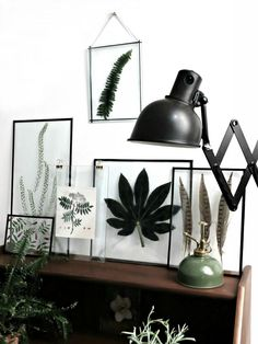 Great plant DIY / framed leafs