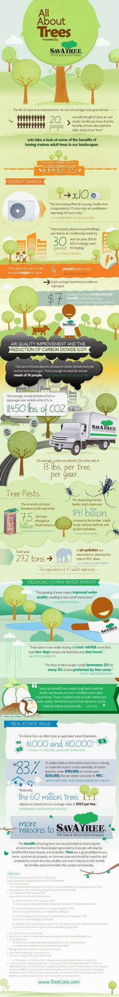 All About Trees [Infographic]