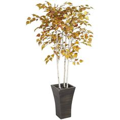 Pier 1 Imports Autumn Artificial Birch Tree ($75) ❤ Liked On Polyvore  Featuring Home