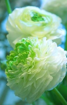 white and green flower