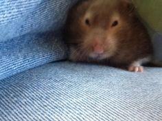 My little hamster named Willow