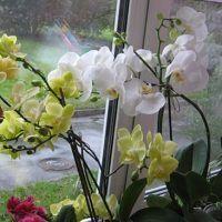 Tajomstvo sadenia orchidey je odhalené. Máte doma jednu orchideu, na ktorú sa nemôžete vynadívať achceli by ste také ešte ďalšie tri? Nemusíte ich kupovať predražené vkvetinárske. Úplne jednoducho si ju môžete zakoreniť aj doma. Nie je to zďaleka také ťažké, ako sa otom rozpráva. Orchidea je obľúbená rastlina mnohých milovníkov kvetov apestovateľov izbovej zelene. Traduje […] Cake Decorating Techniques, Glass Vase, Herbs, Plants, Garden, Garten, Planters, Gardening, Outdoor