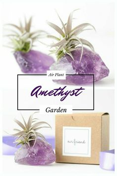 What a beautiful decor idea. Amethyst crystal and air plant that would make a great gift. I think the beauty of this garden speaks for itself & amethyst are such a positive healing stone. #affiliate