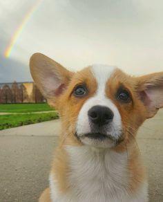 Saw a rainbow had a corgi pup took an opportunity. http://ift.tt/2odXmKY