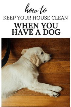 How to keep your house clean when you have a dog