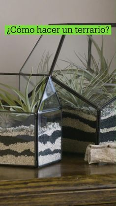 Succulent Terrarium, Air Plants, Feng Shui, House Plants, Planting Flowers, Cool Things To Buy, Diy And Crafts, Succulents, My Room