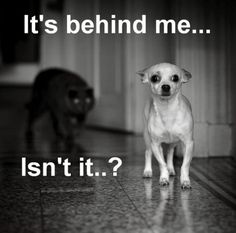 I feel it lookin' at me!! (Mr. Bojangles ain't afraid a no cats!) #funny dog #pupRUNNER®